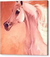 Desert Prince Arabian Stallion Canvas Print
