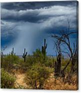Desert Rains  Canvas Print