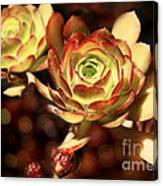 Desert Roses Canvas Print