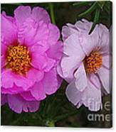 Desert Roses In Purple And Pink Canvas Print
