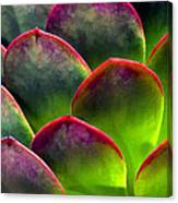 Desert Succulent In Bright Sun And Shade Canvas Print