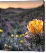 Desert Sunset Blossom Canvas Print
