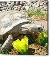 Desert Tortoise Delight Canvas Print