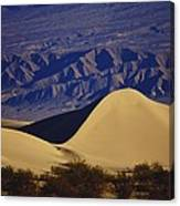 Desert Wave Canvas Print