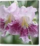 Desert Willow Canvas Print