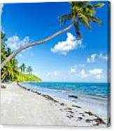 Deserted Beach And Palm Trees Canvas Print