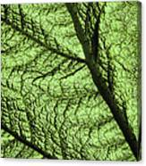 Design In Nature Canvas Print