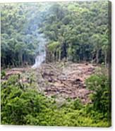 Desmatamento Floresta Amazônica Canvas Print