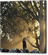 Destined To Rise Above The Crowd Canvas Print