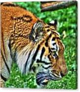 Determination In The Tigers Stare Canvas Print