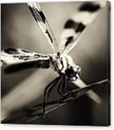 Determined Dragonfly Canvas Print