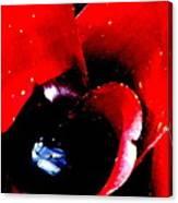 Devilish Eye Of The Bromeliad Canvas Print