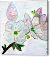 Dew And Smell Of Almond Flowers Canvas Print