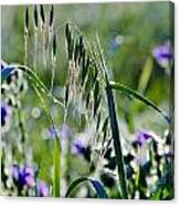 Dew Drops On Grass Canvas Print