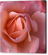 Dew Drops On My Petals Canvas Print