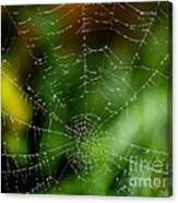 Dew Drops On Spider Web 3 Canvas Print
