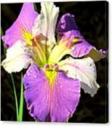 Dew On An Iris Canvas Print