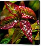 Dew On Autumn Leaves Canvas Print
