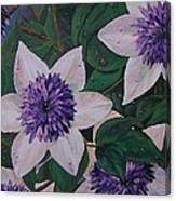 Clematis After The Rain Canvas Print