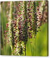 Dew On The Grass Canvas Print