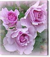 Dew On The Roses Canvas Print