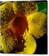 Dew Trumpet Canvas Print