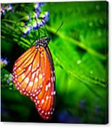 Dewdrop Butterfly Canvas Print