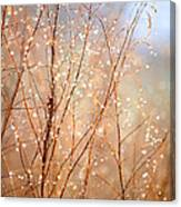 Dewdrop Morning Canvas Print