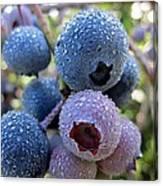 Dewy Blueberries Canvas Print