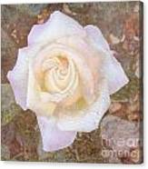 Dewy Dawn Peace Rose Canvas Print