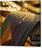 Dewy Leaves Canvas Print