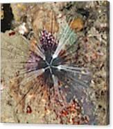 Diadema Urchin Canvas Print