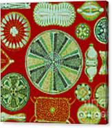 Diatoms-ernst Haeckel Canvas Print