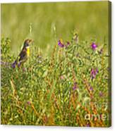 Dickcissel And Flowers Canvas Print