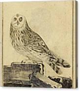 Die Stein Eule Or Church Owl Canvas Print