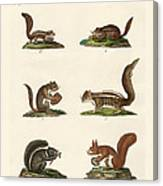 Different Kinds Of Squirrels Canvas Print
