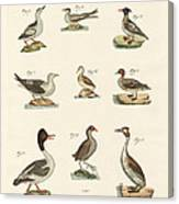 Different Kinds Of Waterbirds Canvas Print