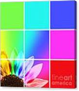 Diffraction Of Light Canvas Print