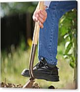 Digging Soil Canvas Print