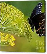 Dill And The Butterfly Canvas Print
