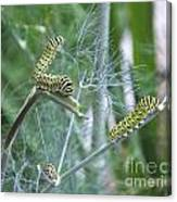 Dillweed And Caterpillars Canvas Print
