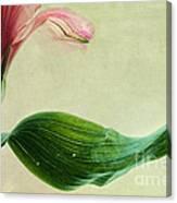 dim colours II Canvas Print
