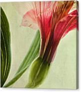 Dim Colours Canvas Print