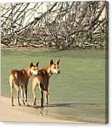 Dingo Duo Canvas Print