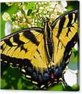 Dinner For The Swallowtail Canvas Print