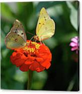 Dinner Table For Two Butterflies Canvas Print
