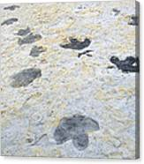 Dinosaur Tracks Canvas Print