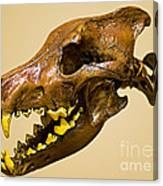 Dire Wolf Skull Fossil Canvas Print