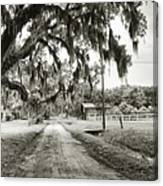 Dirt Road On Coosaw Plantation Canvas Print