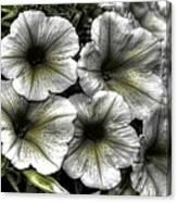 Dirty Flowers 2 Canvas Print